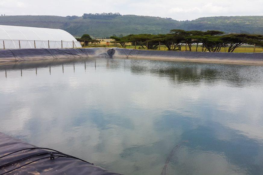 ecoligo_kenia_swimming-pv